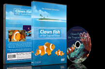 Clown Fish DVD