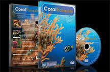 Coral Tranquility 2016