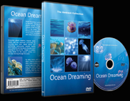 Scenery for Relaxation of Oceans with Marine Animals and Sea Life