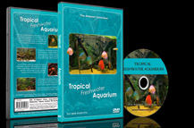 Tropical Fishes and Amazon River Fish