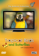 tropical_birds_and_butterflies_with_classical_music_from_the masters