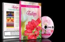 Tulips and Flowers is Spring Summer Gardens with Piano Music